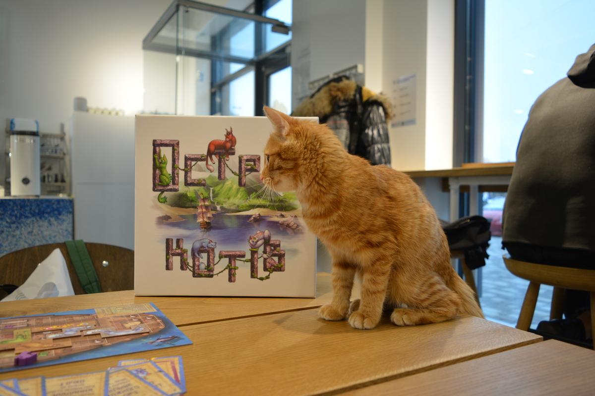 Огляд настільної гри Острів Котів купити придбати Geek Informator (2)